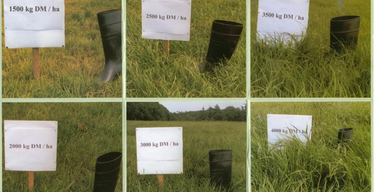 It's time to get serious about grass