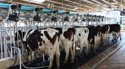 Soil and cow fertility key driver for profit