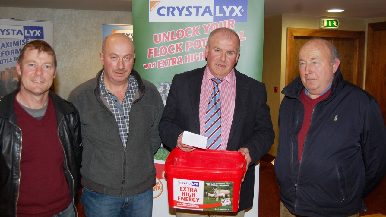 Tremendous turnout for Tralee sheep meeting