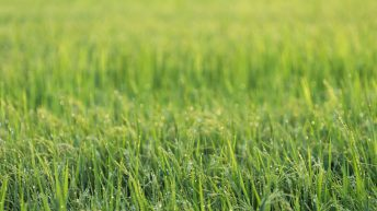 Spring vs Autumn reseeding – What works best?
