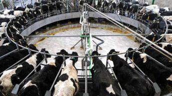 'Poor fertility No 1 barrier to milk profit'