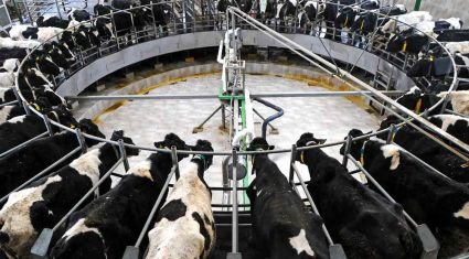 'Poor fertility No 1 barrier to milk profit'