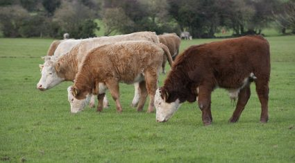 Beef price anger spills into the UK
