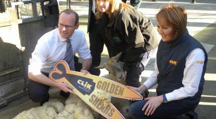 International teams signed up for sheep shearing