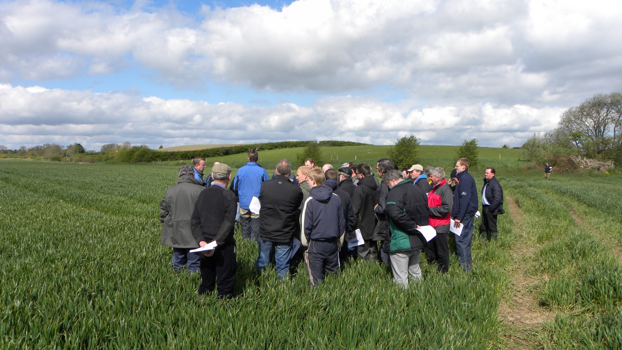 Septoria resistance threatens viability of winter wheat crops