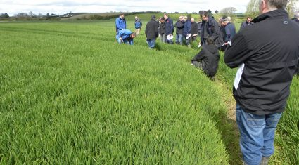 Well sown is well grown, according to Teagasc