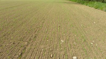 'Well sown is half grown for malting barley crops'