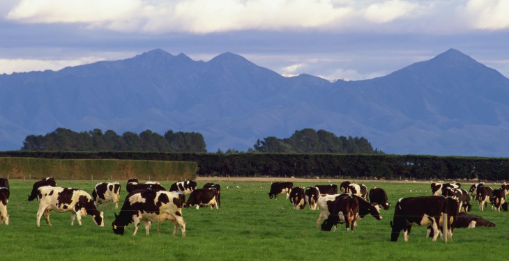 New Zealand farmers not hitting the 'panic button' yet