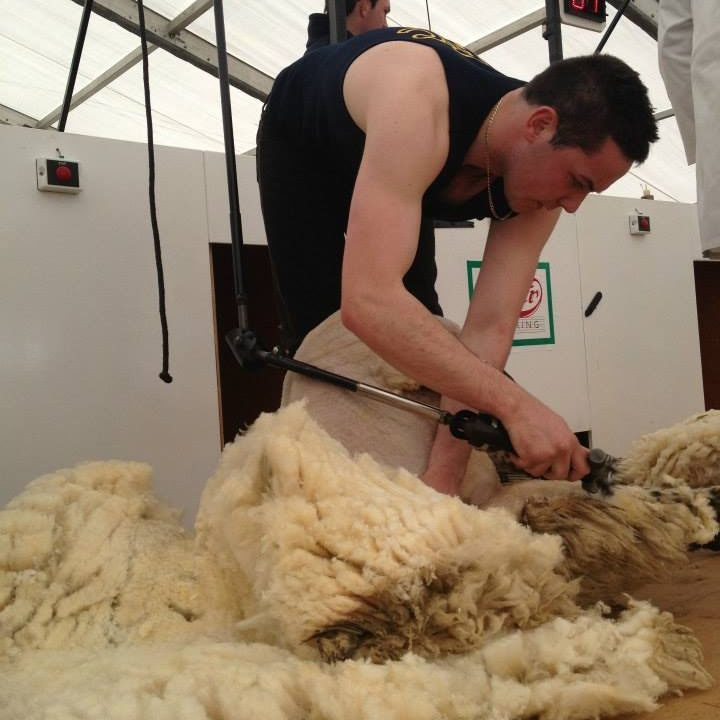 Sharpen up for shearing