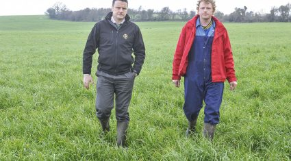 Lots of grass on Golden Vale dairy farm