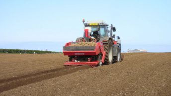 Over a 10% drop in area of land under potatoes last year