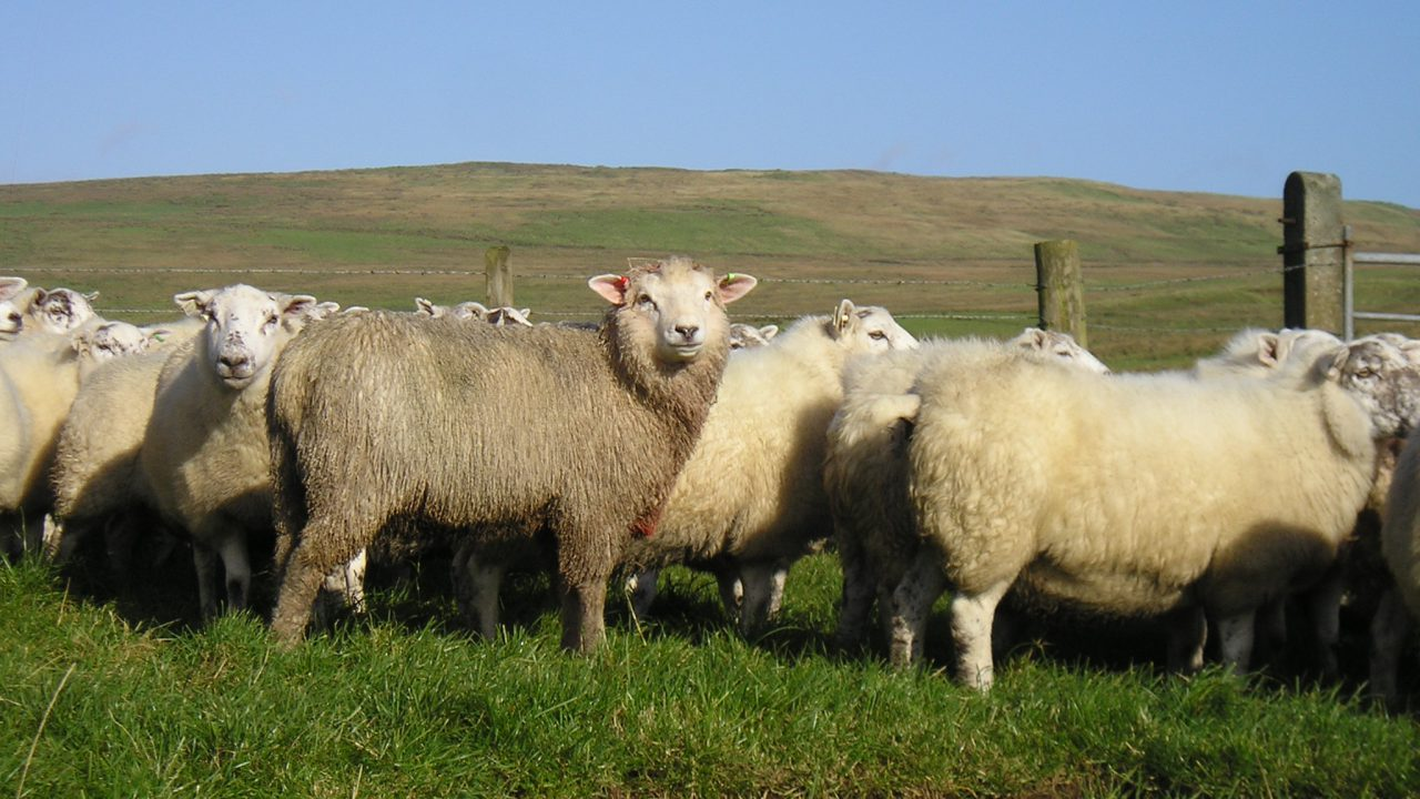 New Zealand lamb export value up 11%, Europe remains main market
