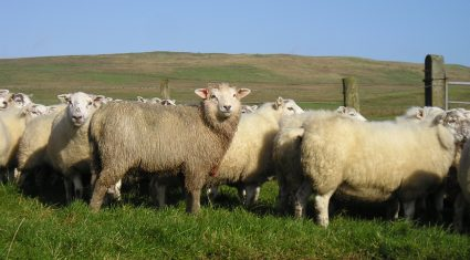 Wool prices could be on the slide