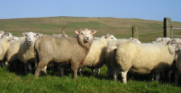 New Zealand lamb export value up 11%, Europe remains main market