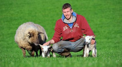 Supervalu set to sell equivalent of 132,000 lambs in 2014