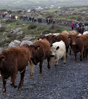 Payments issuing under Burren Farming for Conservation Programme