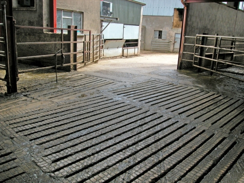 Clean housing reduces the risk of mastitis