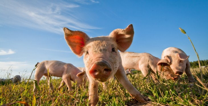 EU challenges Russia in the WTO over pork import ban