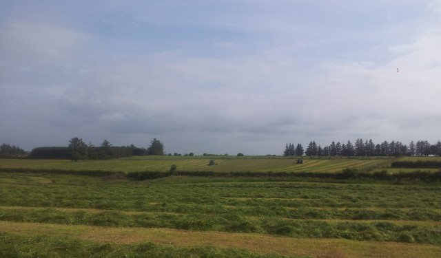 Weather conditions determine first-cut silage timing and quality