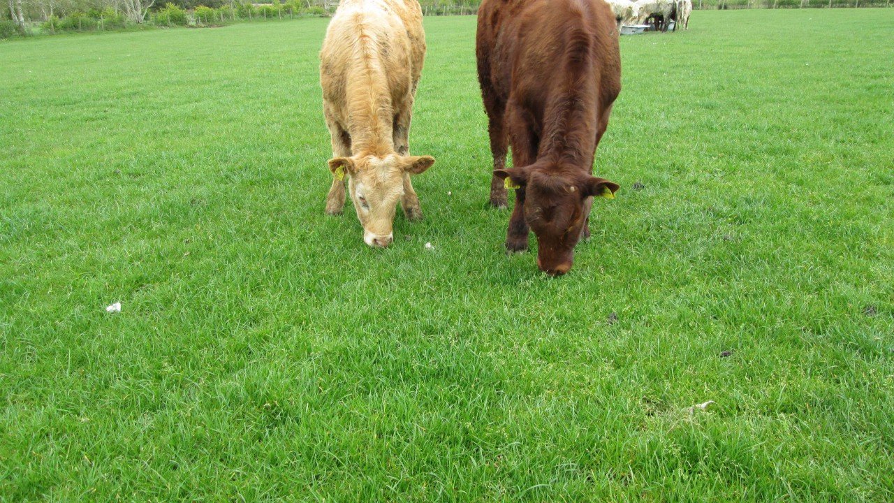 'Delivering genetic gains in beef production a big challenge'