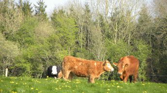 Beef Plan suggests pricing models to 'protect survivability of producers'