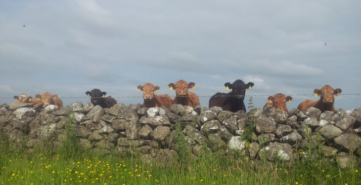 Stable EU beef supplies anticipated – Bord Bia