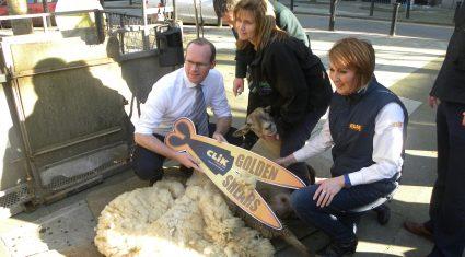 14 days and counting to World Sheep Shearing championships