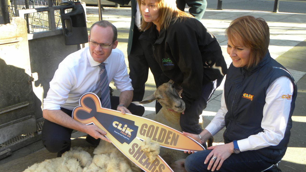Traditional skills of hand shearing will be highlight of world championships in Gorey