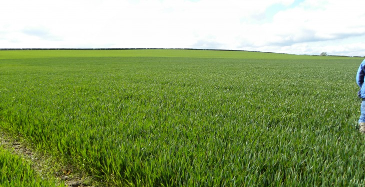 Winter cereal crops showing good promise – Teagasc