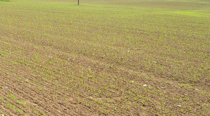 Ukraine spring cereals' planting – down 10%