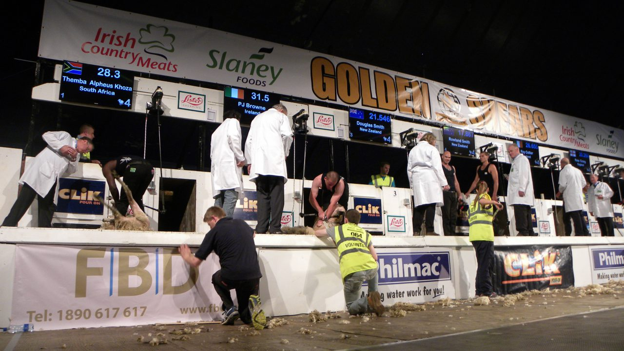 Whats on at Golden Shears: DAY 4