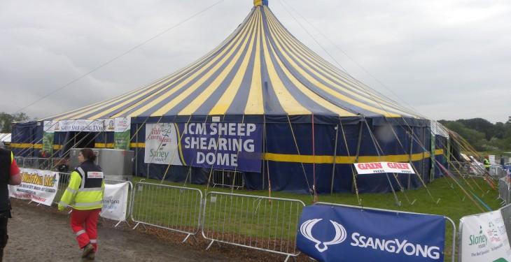 Sheep Shearing Championships update