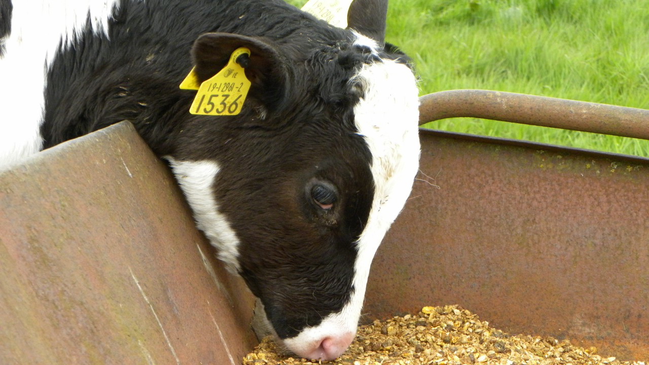 36% of animal feed tested not up to Department's standards