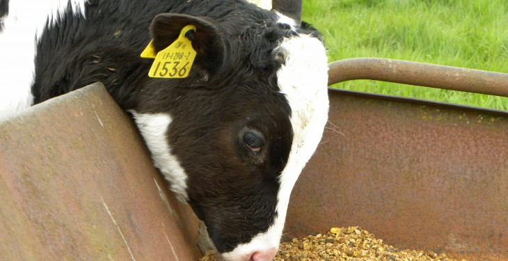 'Increased calf numbers drive calf feed sales'