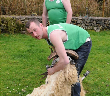 Mayo shearers to represent Ireland at World Blade Shearing Championships