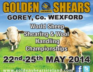 Golden Shears 2014 Live Stream