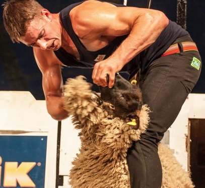 Scott wins eighth All-Ireland Title at 16th World Sheep Shearing Championships