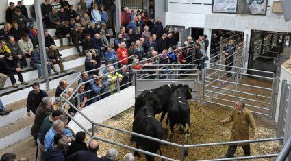 Irish 'farm households' almost halve in 40 years