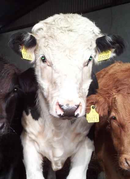 British farmers slam short-term memories in the meat trade