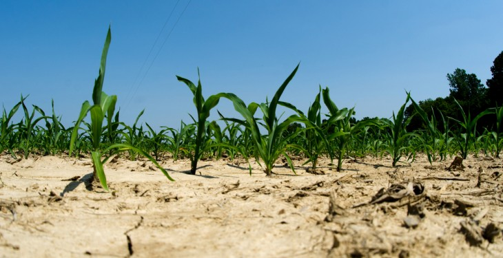 Threat of El Niño developing in 2014 could affect feed prices