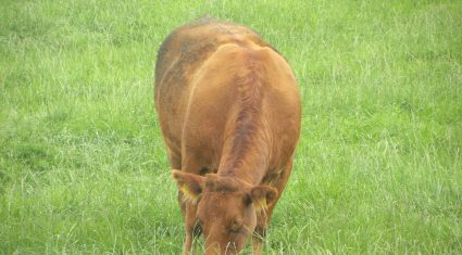 Controlling parasites during the grazing season