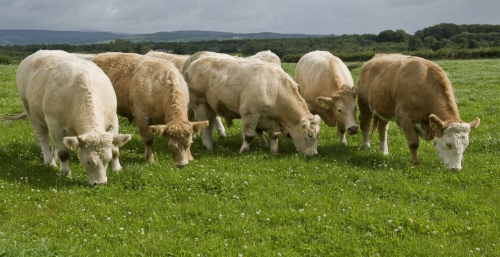 May sees another big uplift in beef production