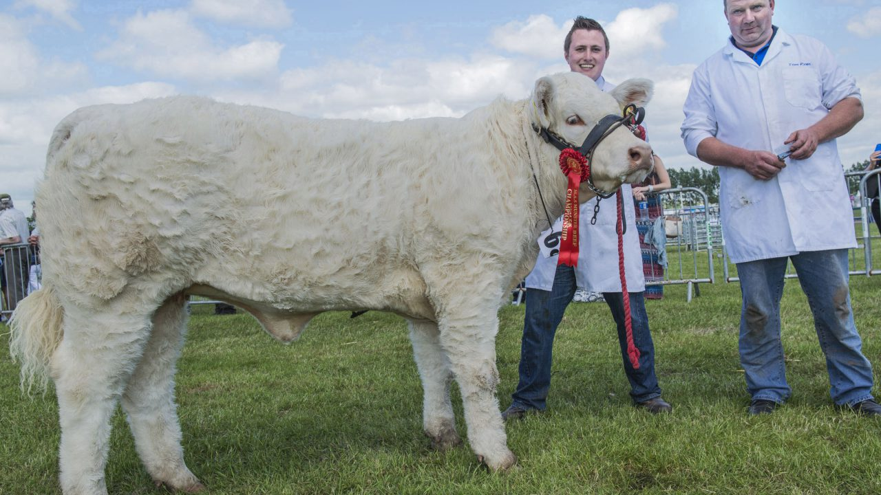 Fun in the sun at Lisburn and Saintfield District Show