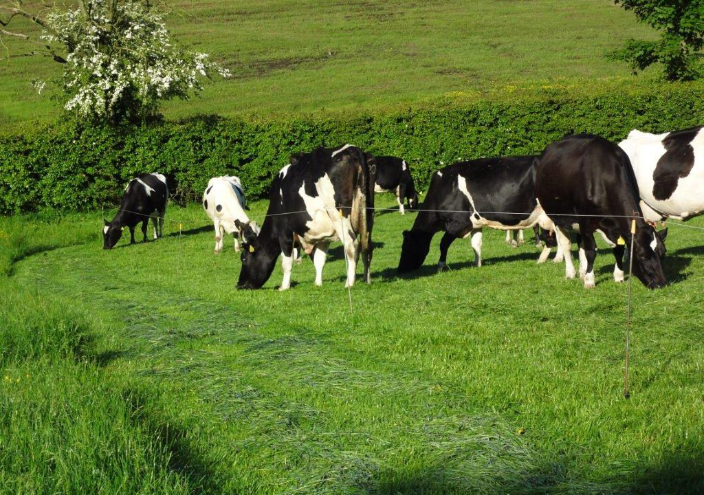 Minister says butterfat deal unlikely for the moment