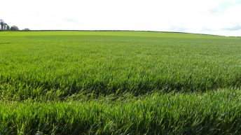 Controlling black grass in crops – 'the answer is not in a herbicide can'