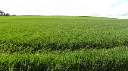 European crops outlook is positive, but disease alert for Ireland