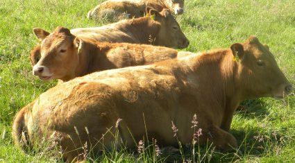 Little change in beef trade last week – Bord Bia