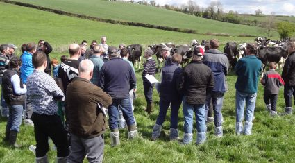 Growing silage with low K levels for dry cows