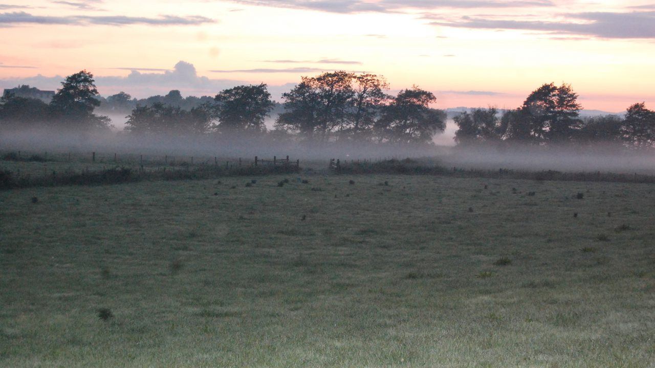 Met Eireann says blue skies this weekend (not that you'll see with the fog!)