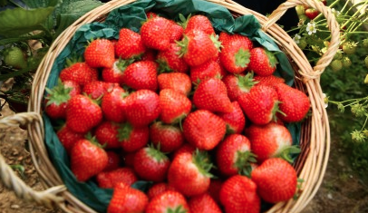 Strawberries sales stay strong